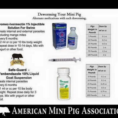 Mini Pig Educational Materials