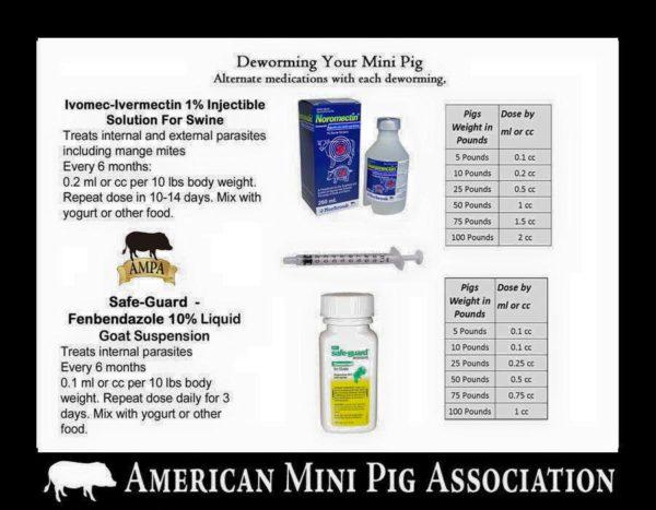 mini pig deworming