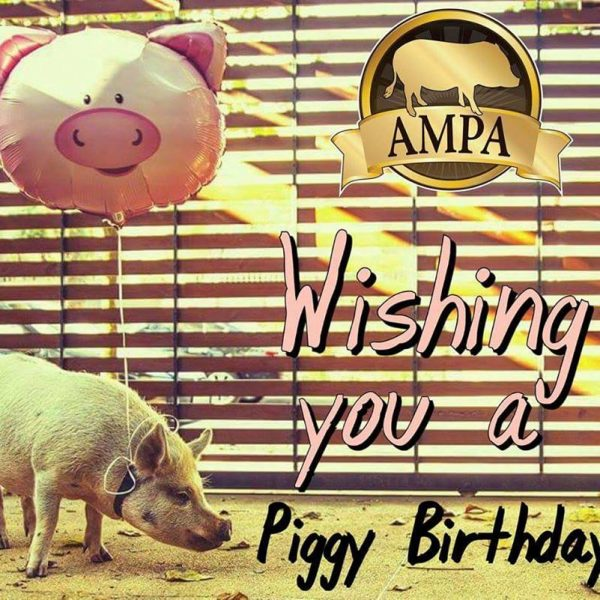mini pig birthday card