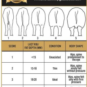 body conditioning chart