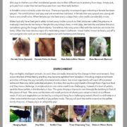 mini pig shelter guide