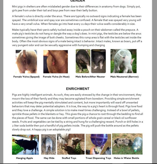 mini pig shelter guide