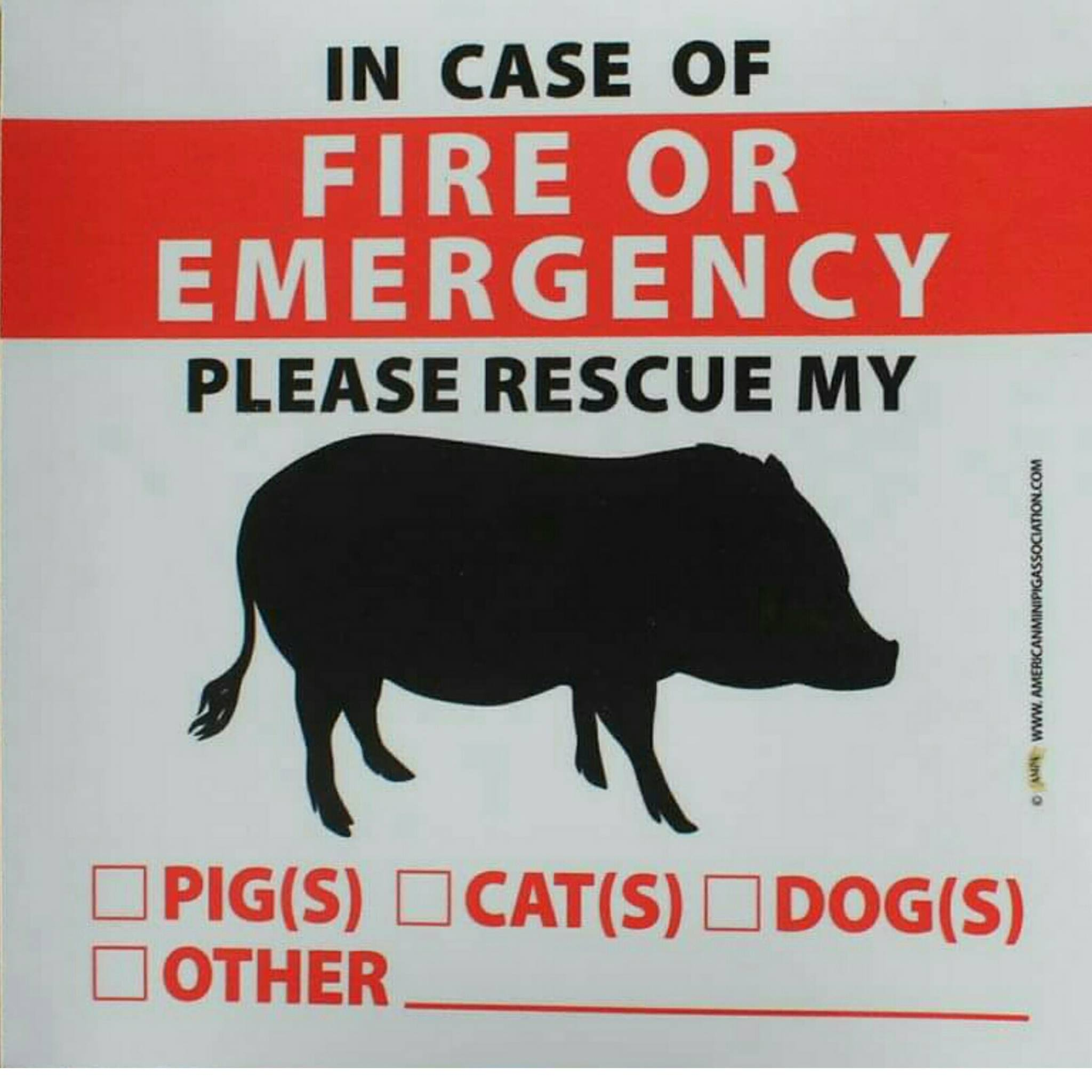 mini pig fire alert sticker