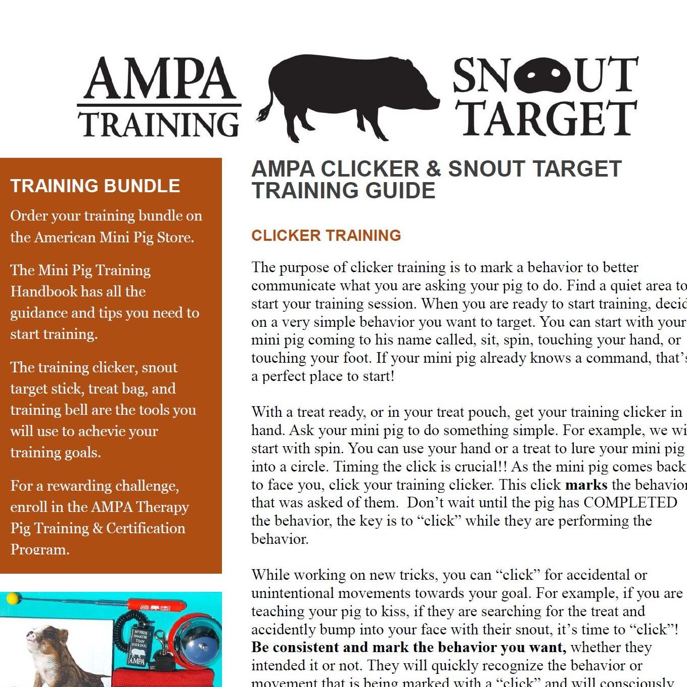 mini pig target training