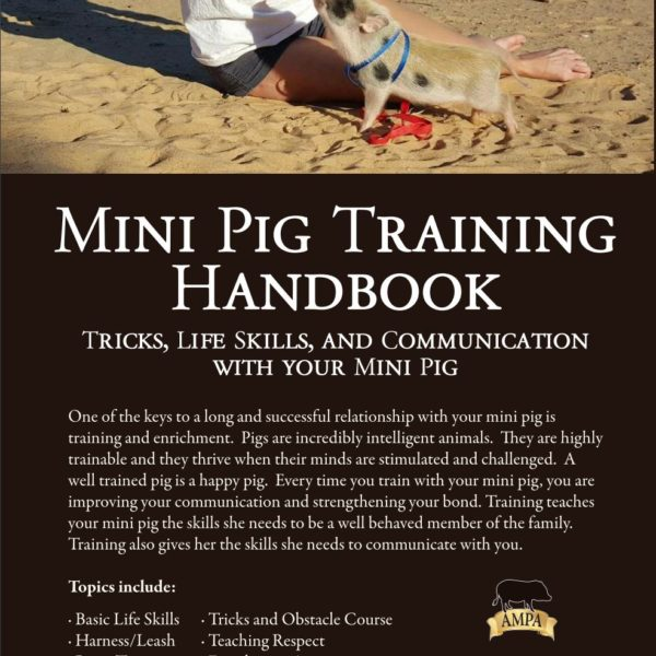 Mini Pig Training