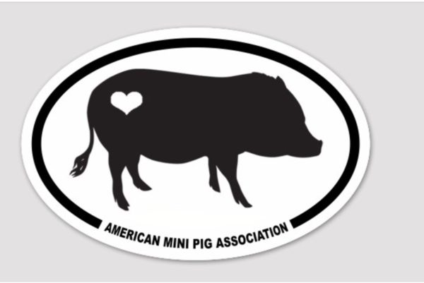 mini pig decals