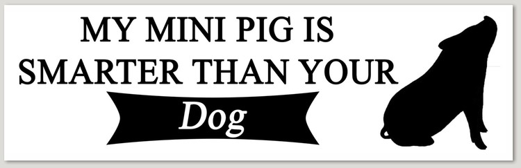 my pig is smarter than your dog decal sticker