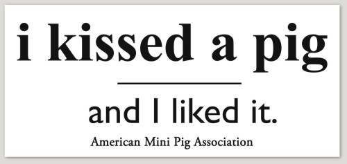 i kissed a pig sticker