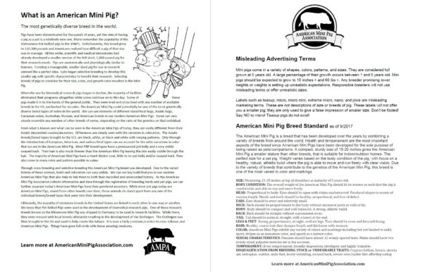 ampa ambassador educational packet
