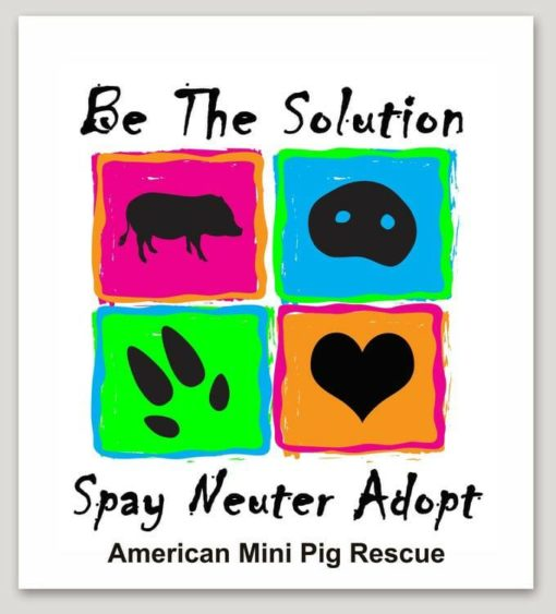 be the solution mini pig decal
