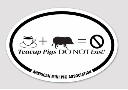 teacup pig sticker decal